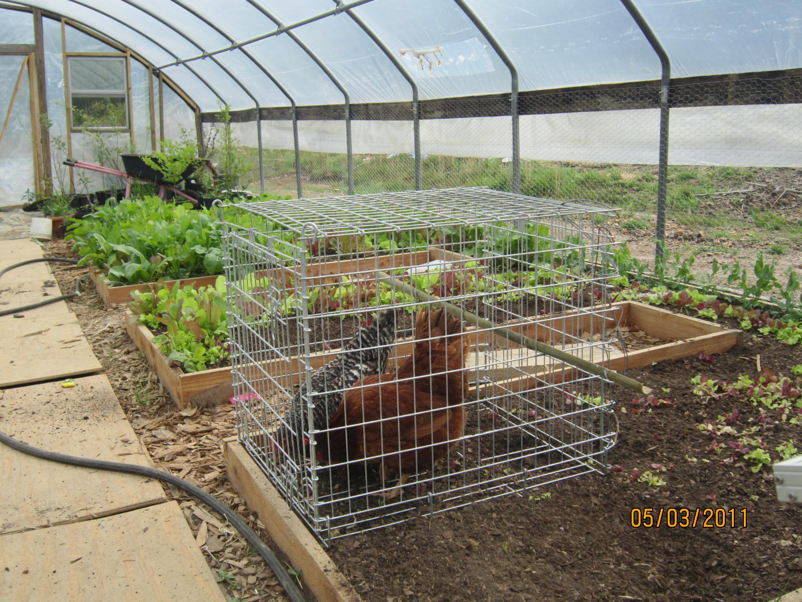 Permaculture Hoophouse ← Spiral Ridge Permaculture on rabbit photography, rabbit compost, rabbit tractor plans, rabbit hill house, rabbit cage tractor, rabbit fruit, rabbit hole house, rabbit garden house, rabbit greenhouse,